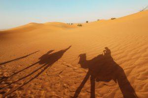 Dromedare Schatten, Tour in der Sahara